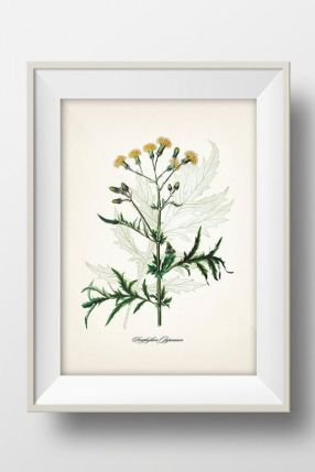 https://www.etsy.com/listing/114722917/yellow-flower-porophyllum-japonicum-fine?ref=shop_home_active_12