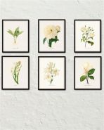 https://www.bellemaisonart.com/products/white-botanical-print-set-no-4-botanical-print-giclee-canvas-art-print-antique-botanical-prints-posters-white-flowers-wall-art?utm_source=Pinterest&utm_medium=Social&utm_campaign=white%20botanicals%206%20prints&pp=1