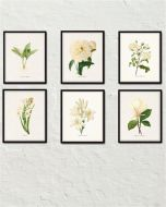 https://www.bellemaisonart.com/products/white-botanical-print-set-no-4-botanical-print-giclee-canvas-art-print-antique-botanical-prints-posters-white-flowers-wall-art?utm_source=Pinterest&utm_medium=Social&utm_campaign=white%20botanicals%206%20prints&pp=1