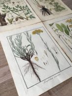 https://www.etsy.com/listing/663105578/1805-original-botanical-prints-set-of-4?ga_order=most_relevant&ga_search_type=vintage&ga_view_type=gallery&ga_search_query=botanical+prints&ref=sc_gallery-1-1&plkey=5e7e69c9bccdbc8df4906773fcd55b355975b291:663105578