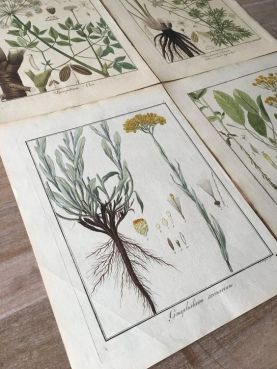 https://www.etsy.com/listing/663105578/1805-original-botanical-prints-set-of-4?ga_order=most_relevant&ga_search_type=vintage&ga_view_type=gallery&ga_search_query=botanical+prints&ref=sc_gallery-1-1&plkey=5e7e69c9bccdbc8df4906773fcd55b355975b291:663105578